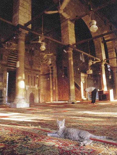 Gato en la mezquita de al-Mu'ayyad