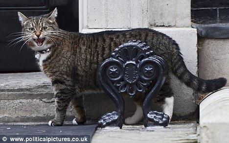 La gata Freya