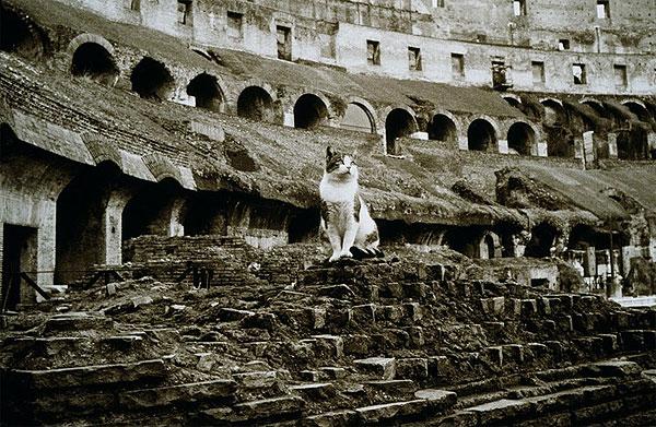 Gato en el Coliseo de Roma