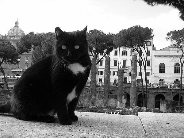 Los gatos romanos también sufren la crisis europea