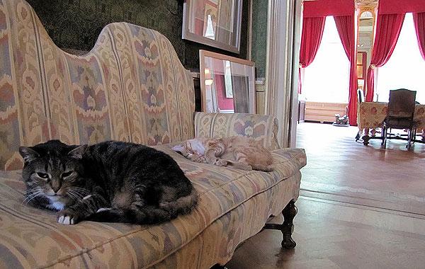 kattenkabinet_2