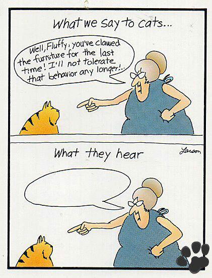 LO QUE DECIMOS AL GATO Fluffy, es la última vez que arañas el sofá, no pienso tolerarlo más.
