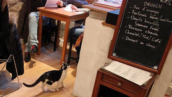 Le Café des chats (París)