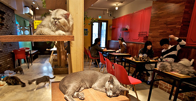 Neko Café de Turín
