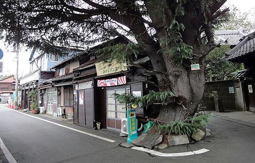 Yanaka_6