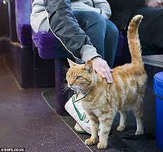 Gatos_buses_Dodger_2