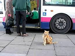 Gatos_buses_Dodger_3
