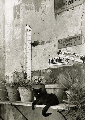 Gato provenzal