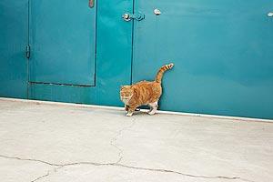 Un gato de Ai Weiwei, por Matt Robinson.jpg