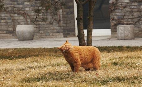 Garfield (por Matt Robinson)