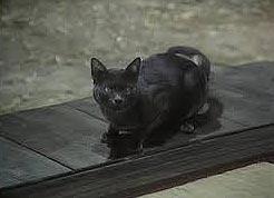 Película I Am a Cat, de Kon Ichikawa (1975)