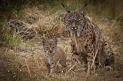 Madre y cría