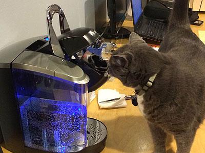 Oreo ante la máquina de café