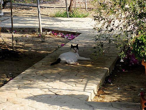 Gato en San Nicolás