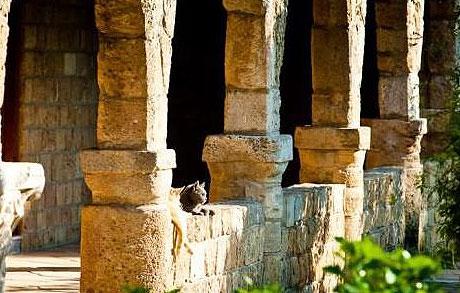 Gato en el claustro de San Nicolás