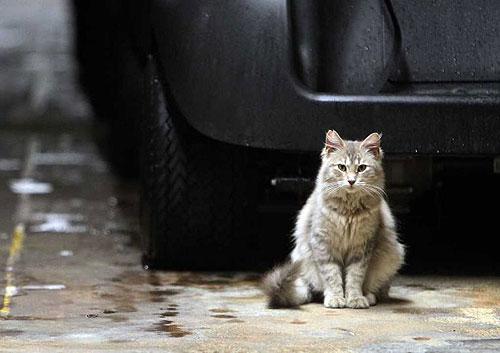 El gato Squeaker