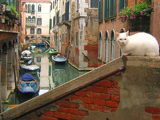 La Contessa en un puente veneciano