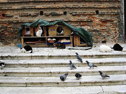 San Lorenzo(Venecia)