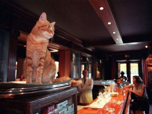 Carmen en el bar del Negresco