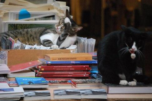 Gatos de la librería Acqua Alta