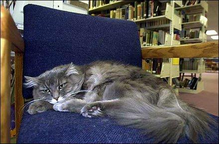 Libby, la gata bibliotecaria de Haysville, Kansas