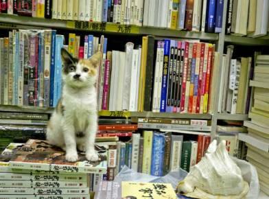 Librería Sam Kee (Hong Kong)
