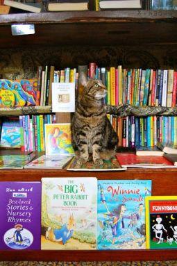 Uno de los gatos de la librería Word on the Water (Londres)