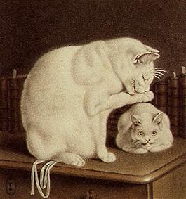Dos gatos blancos en una mesa