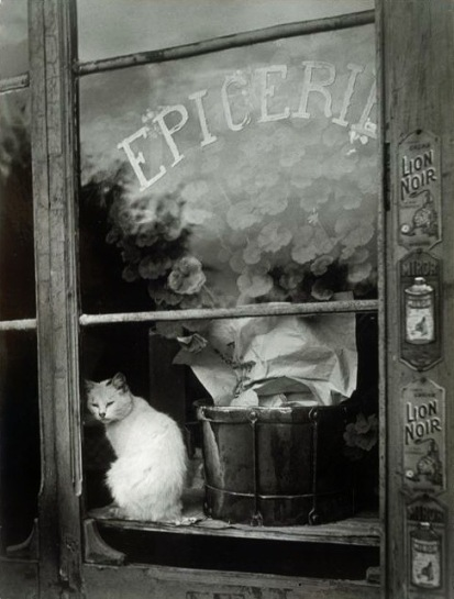 Gata en escaparate - 1939
