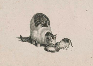 Gata y gatito