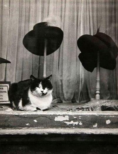 Gato en sombrerería