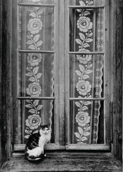 Gato en ventana - 1953