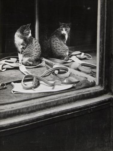 Sin título - 1938