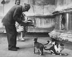 Stravinsky con gatos en Venecia