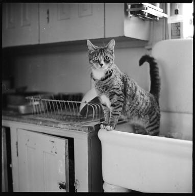 12 Portraits of a Cat - Walker Evans (1903-1975)