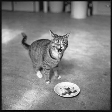 walker-evans-cat-04
