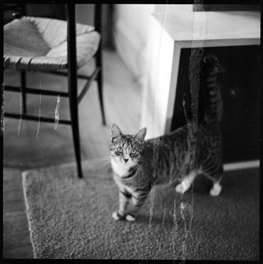 walker-evans-cat-05