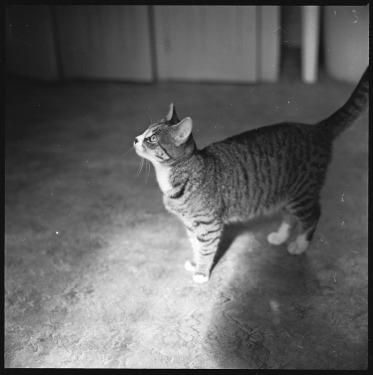 walker-evans-cat-06