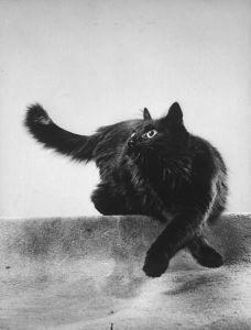 Blackie con las patas cruzadas.
