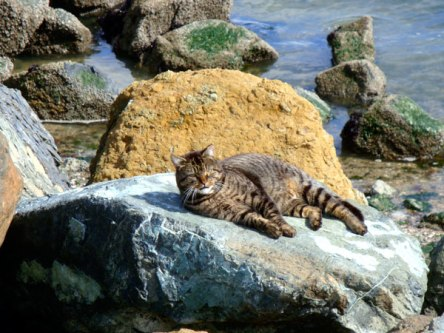 tabby-tanning-bed_0