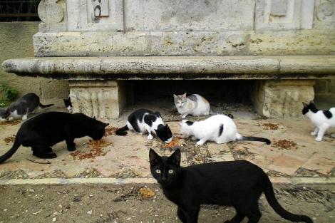 Gatos en el Jardín de Viveros