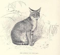 Ilustración de 1904