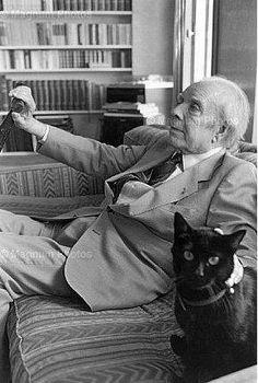 Con el gato negro desconocido