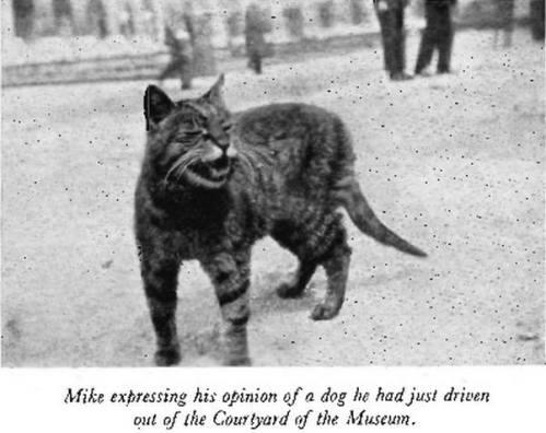 Mike dando su opinión del perro que acaba de echar