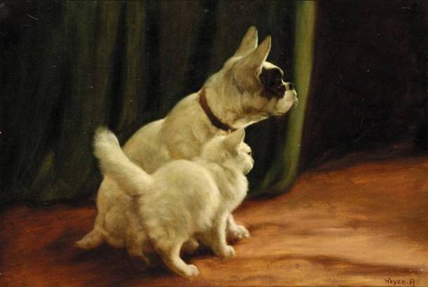cat-and-dog-arthur-heyerjpg-jpeg-image-750504-pixels-1404937012_org