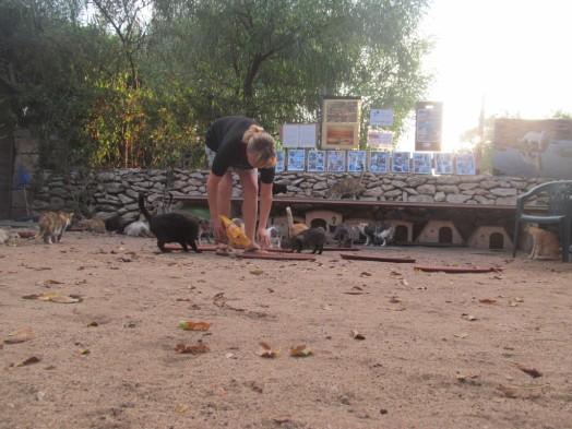 Irina Albu ocupándose de los gatos