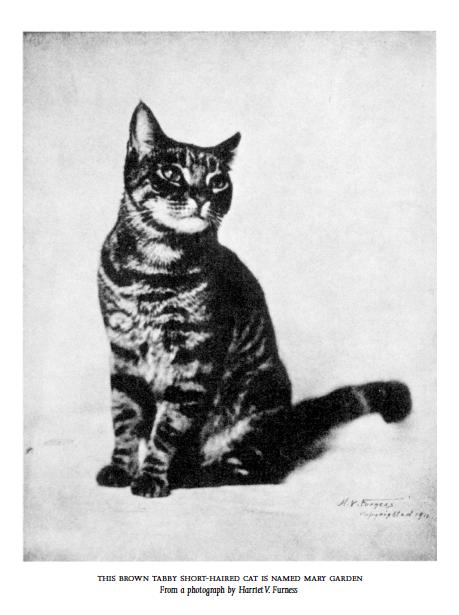 Una ilustración de El tigre