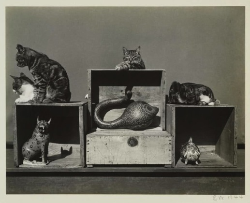 Los gatos Bodieson, Sidney, Roger, Prince Kitt, John y Marco Polo (1944)