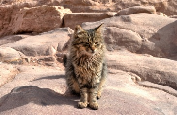 cats-of-petra-41