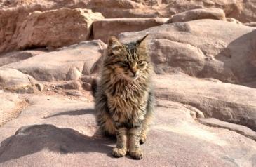 cats-of-petra-41